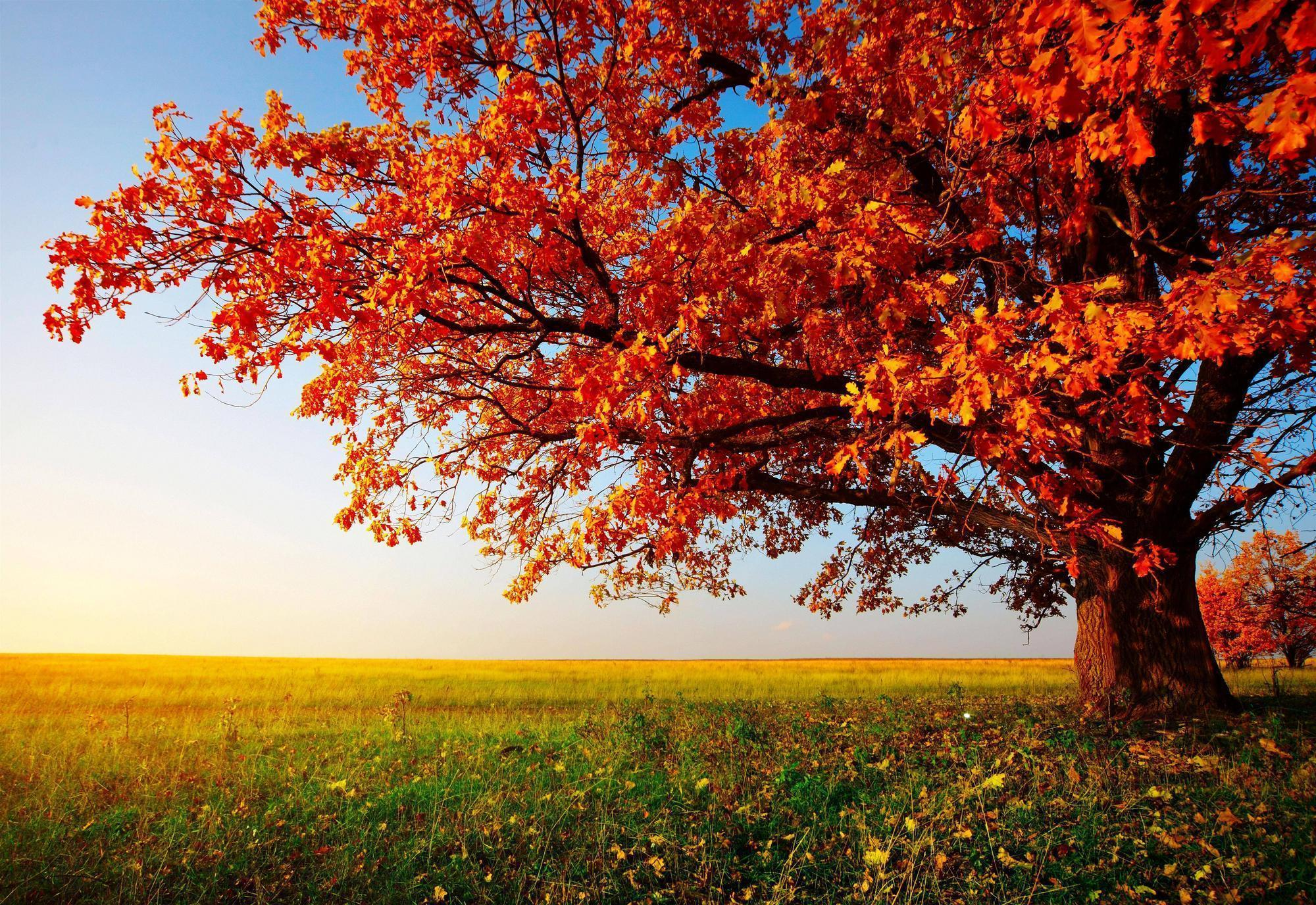 Fall Trees Wallpapers 2000x1376