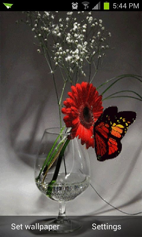 Nice Butterfly Live Wallpaper Android Live Wallpaper download 480x800