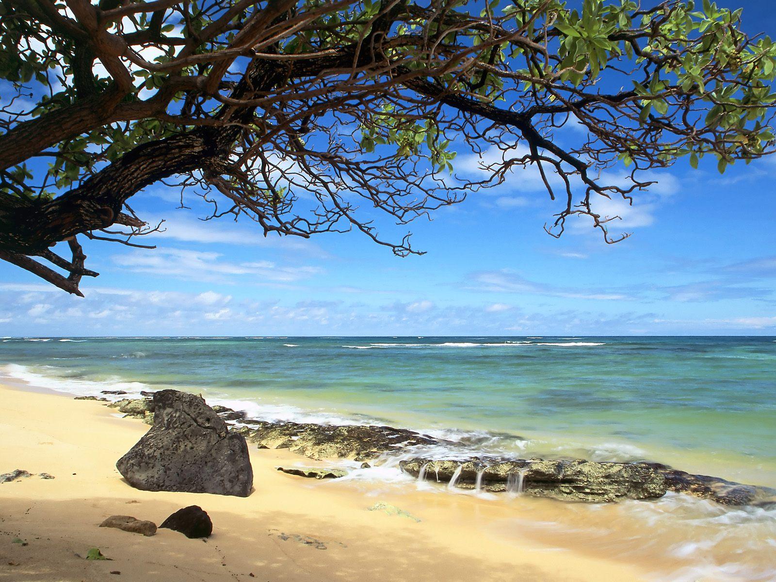 Kanenelu Beach Oahu Hawaii - Nature Wallpaper Image featuring Beaches ...