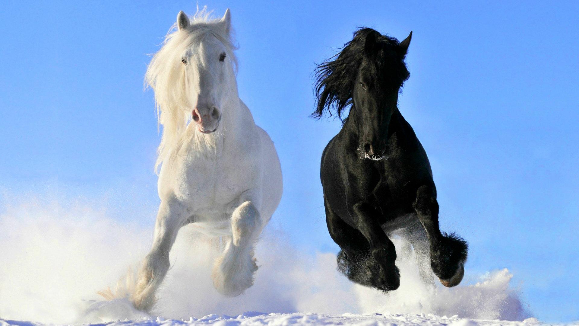 Horses HD Wallpapers Horse Desktop Wallpapers 1080p HD 1920x1080