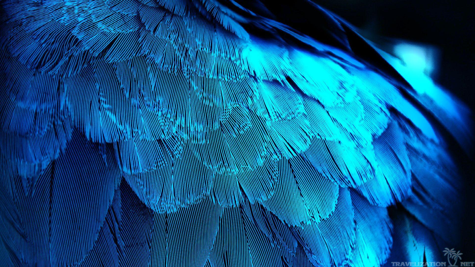 Bird Feather Wallpaper 1920x1080