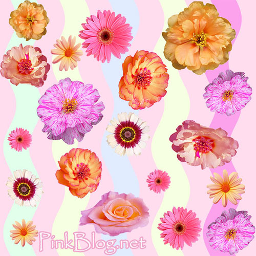 Betsey Johnson Roses Wallpaper Pink backgrounds of cute 500x500