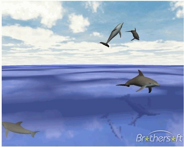 3D Desktop Wallpaper Dolphins   wwwwallpapers in hdcom 647x517