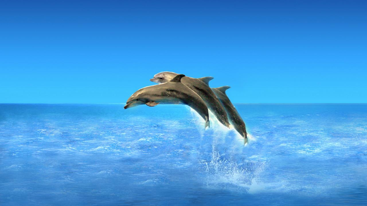 HD Dolphins Live Wallpaper PRO   screenshot 1280x720