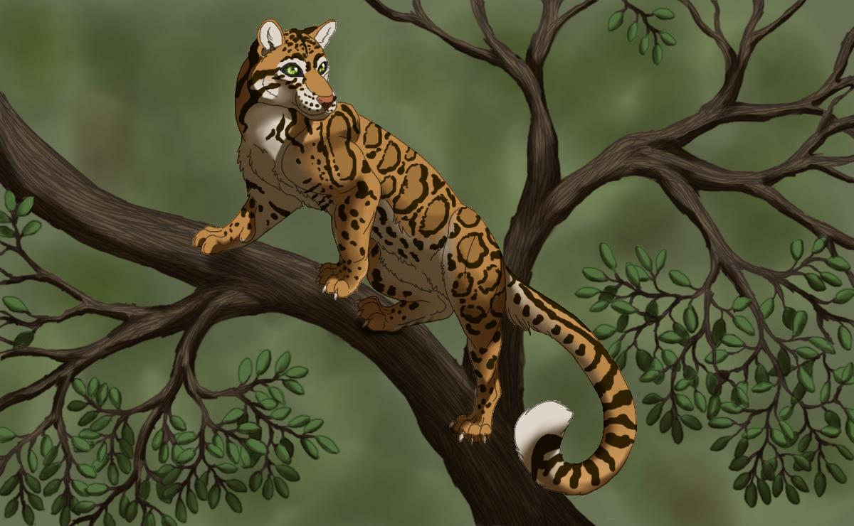 Clouded Leopard Wallpapers 1200x740