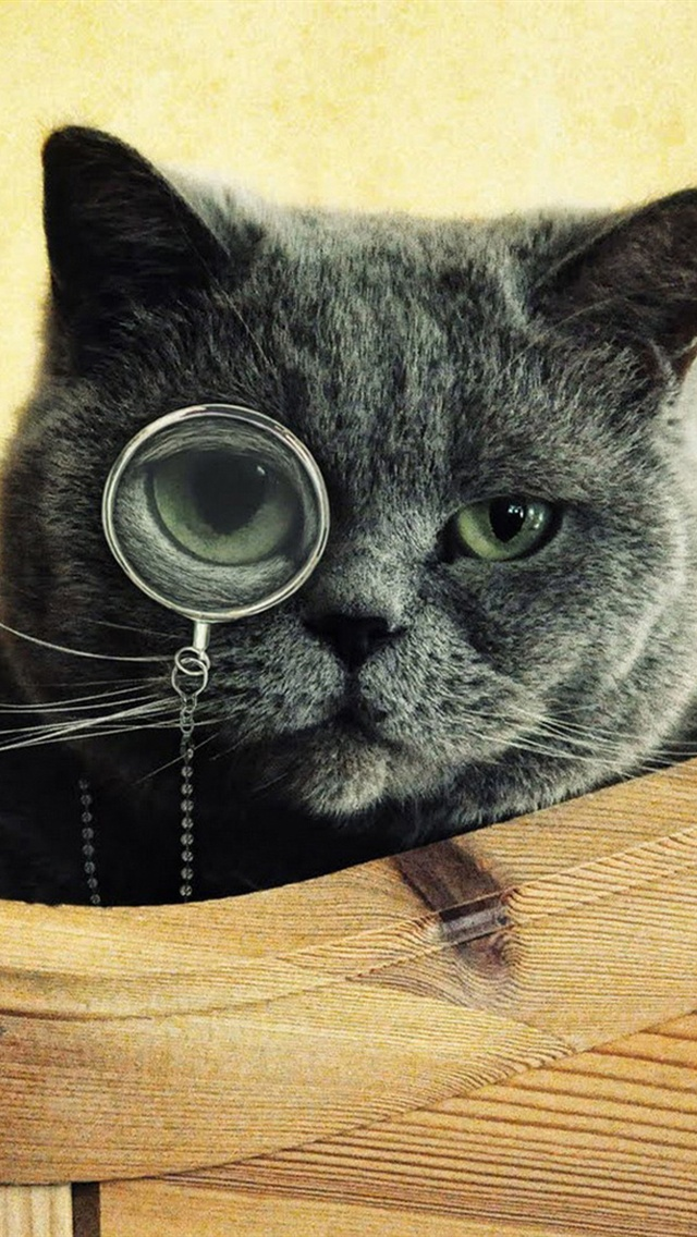 cat your screen resolution to download click on black cat wear glasses 640x1136