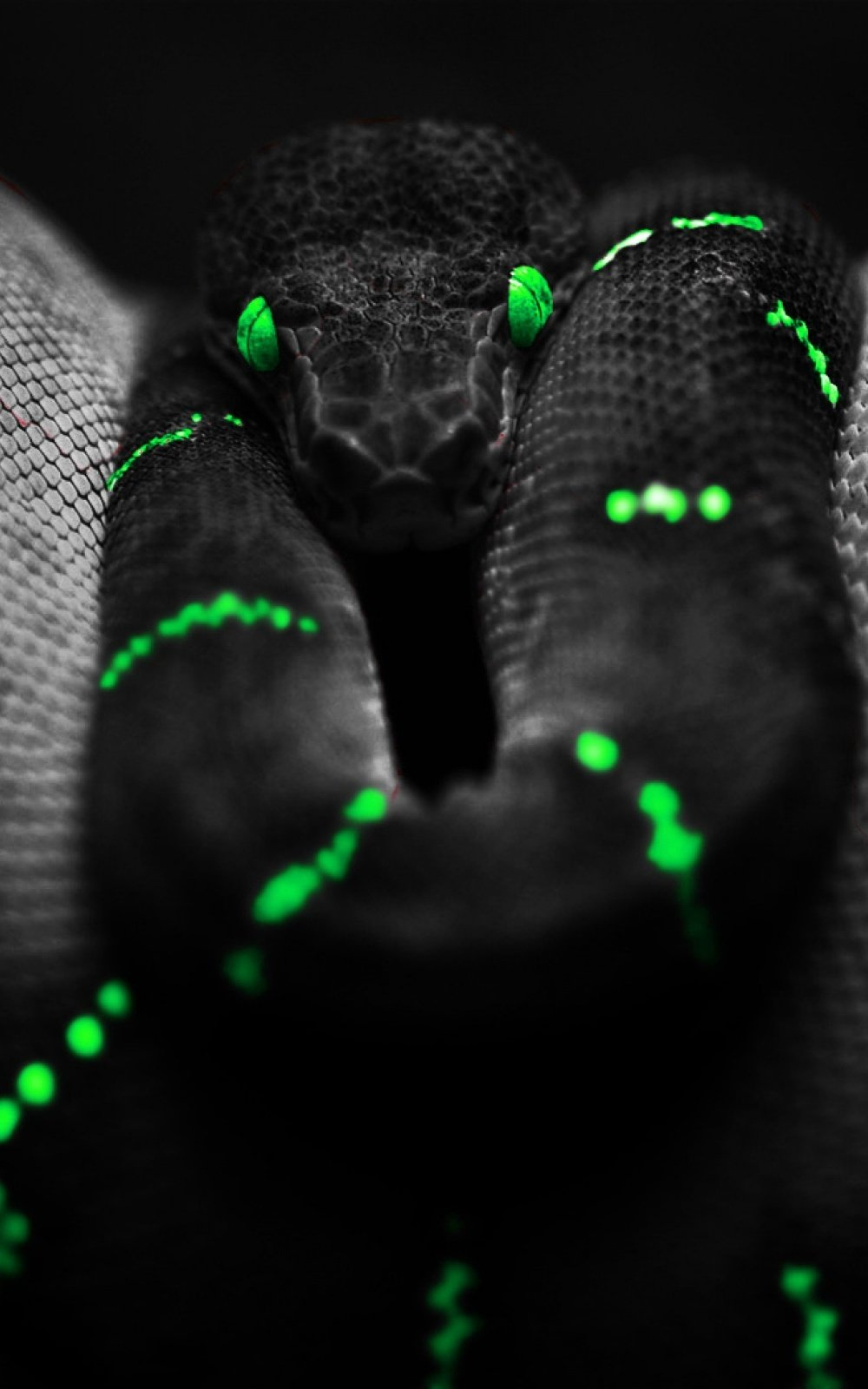 Black Snake Neon Green Android Wallpaper download 1000x1600