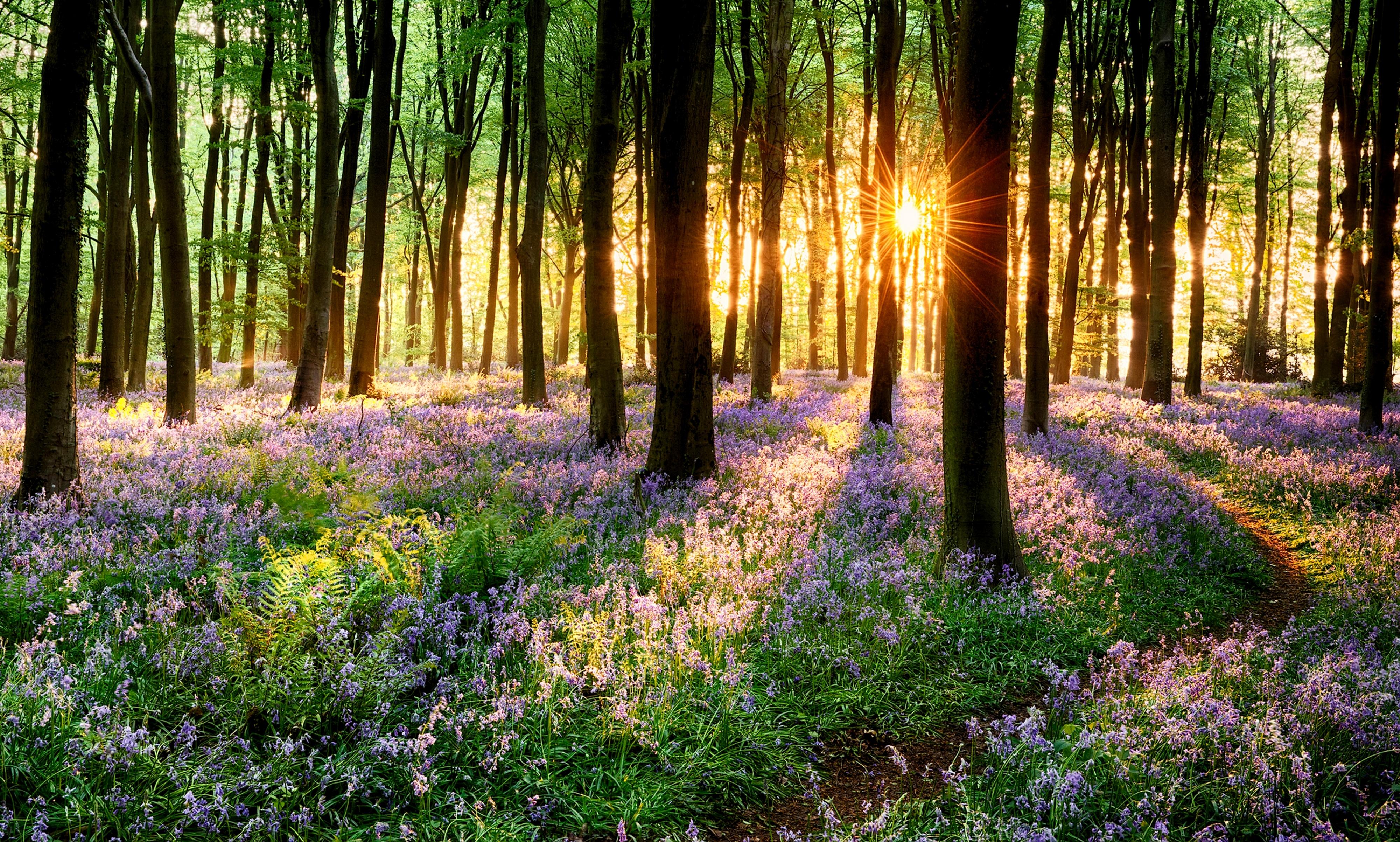 весной в лесу  № 113925 бесплатно