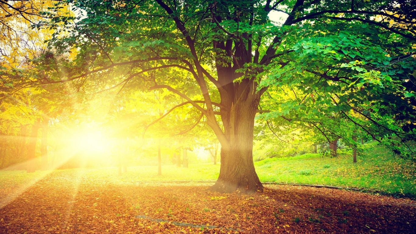 im73 Beautiful Sunny Day Wallpaper 1366x768   Picseriocom 1366x768