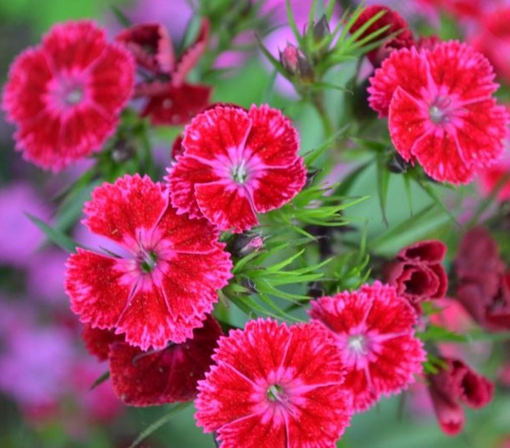 Flower Wallpaper: Nature Flower Wallpaper