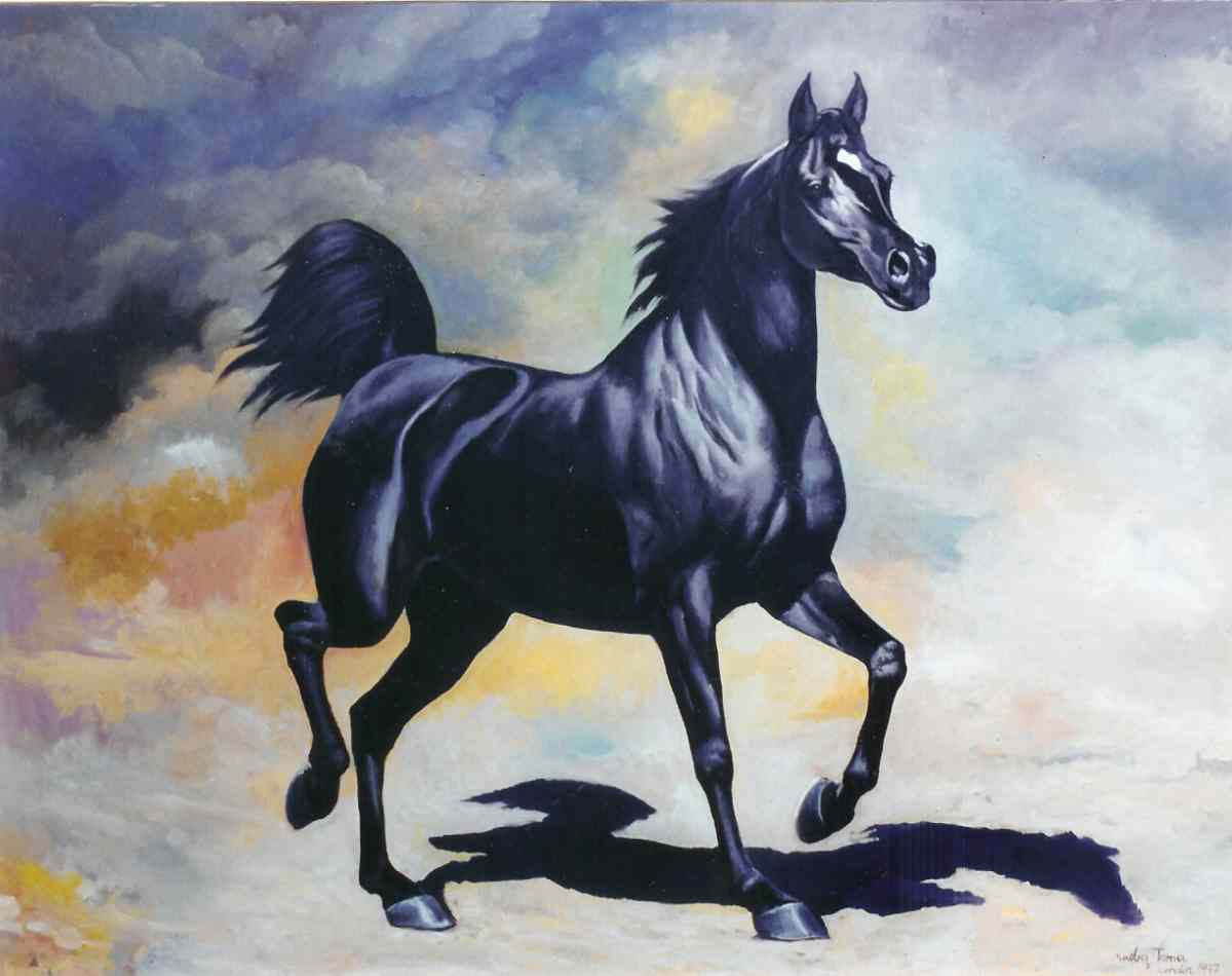HD Animals Wallpapers Black Horses Black Horse Wallpapers for 1200x950