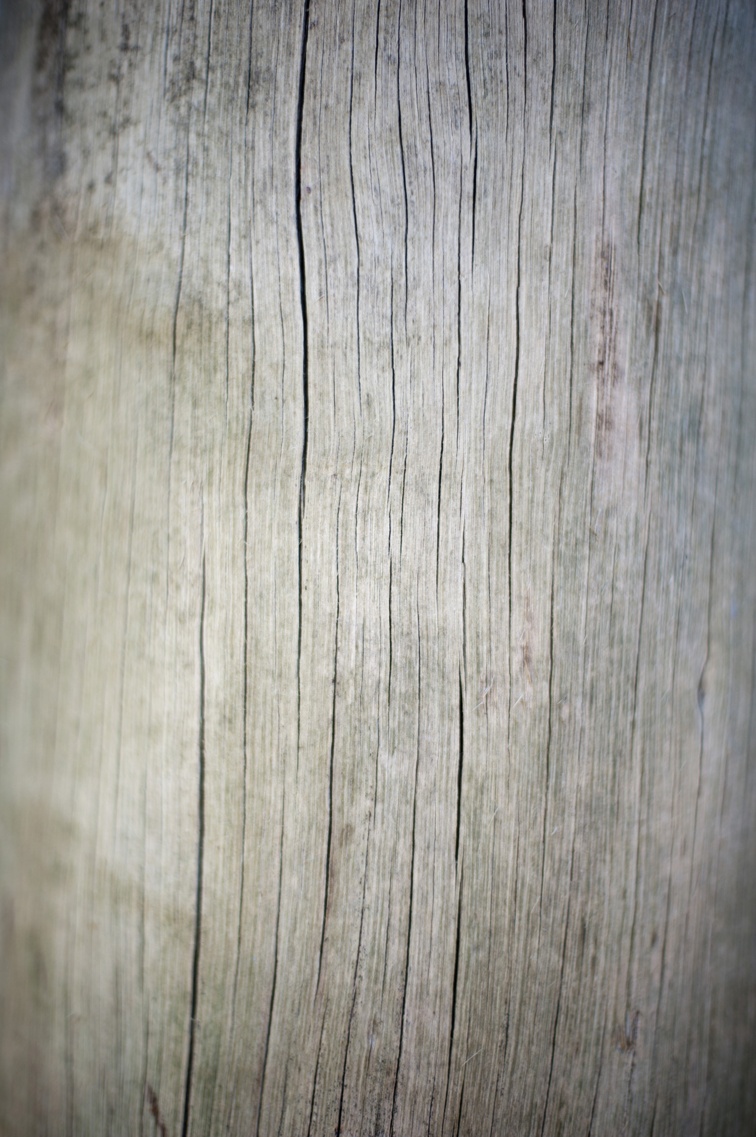 Image Collections Wood Dried cracked wood 2529x3800