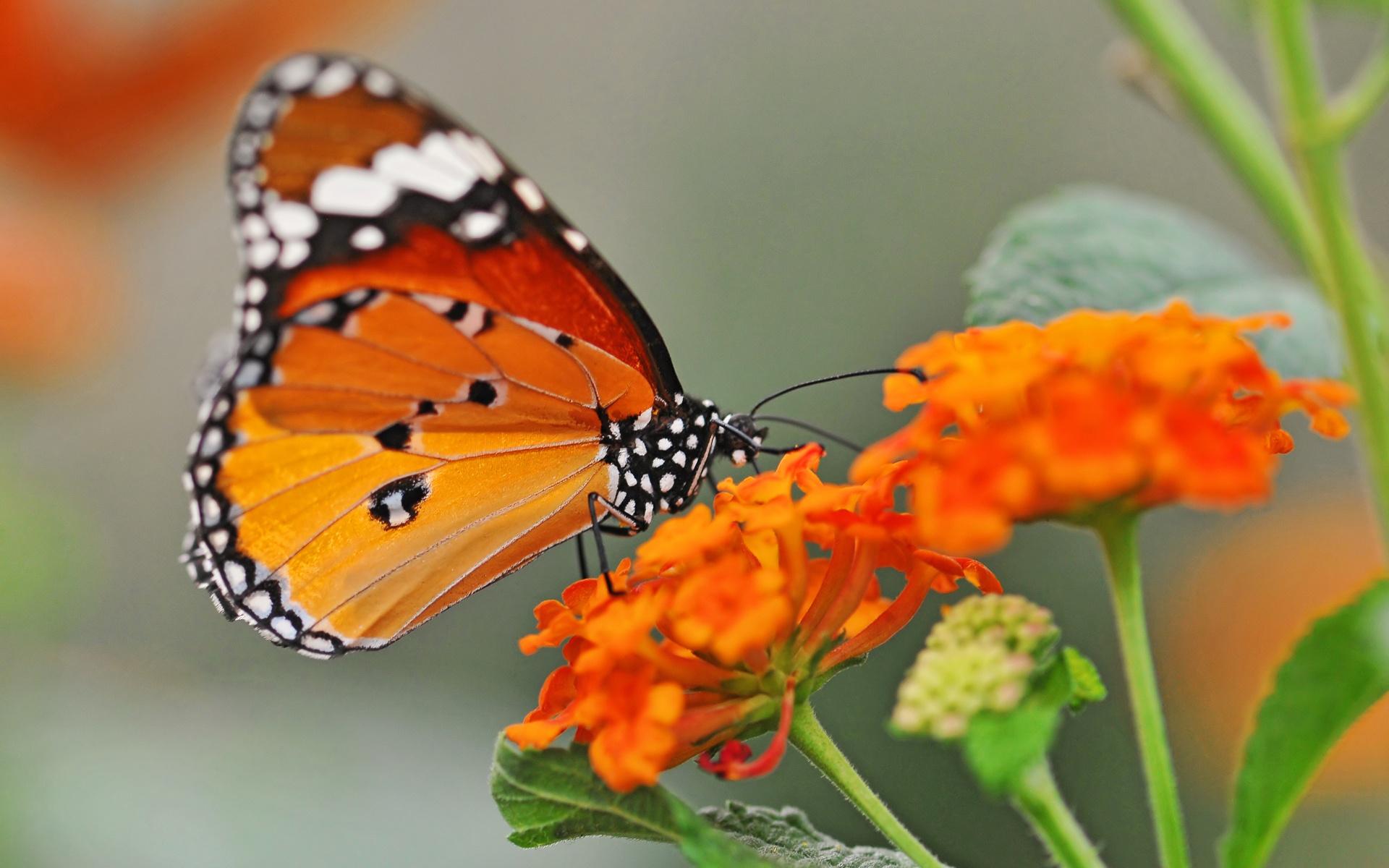 Aninimal Book: [46+] Free Desktop Wallpaper Butterflies Flowers on ...