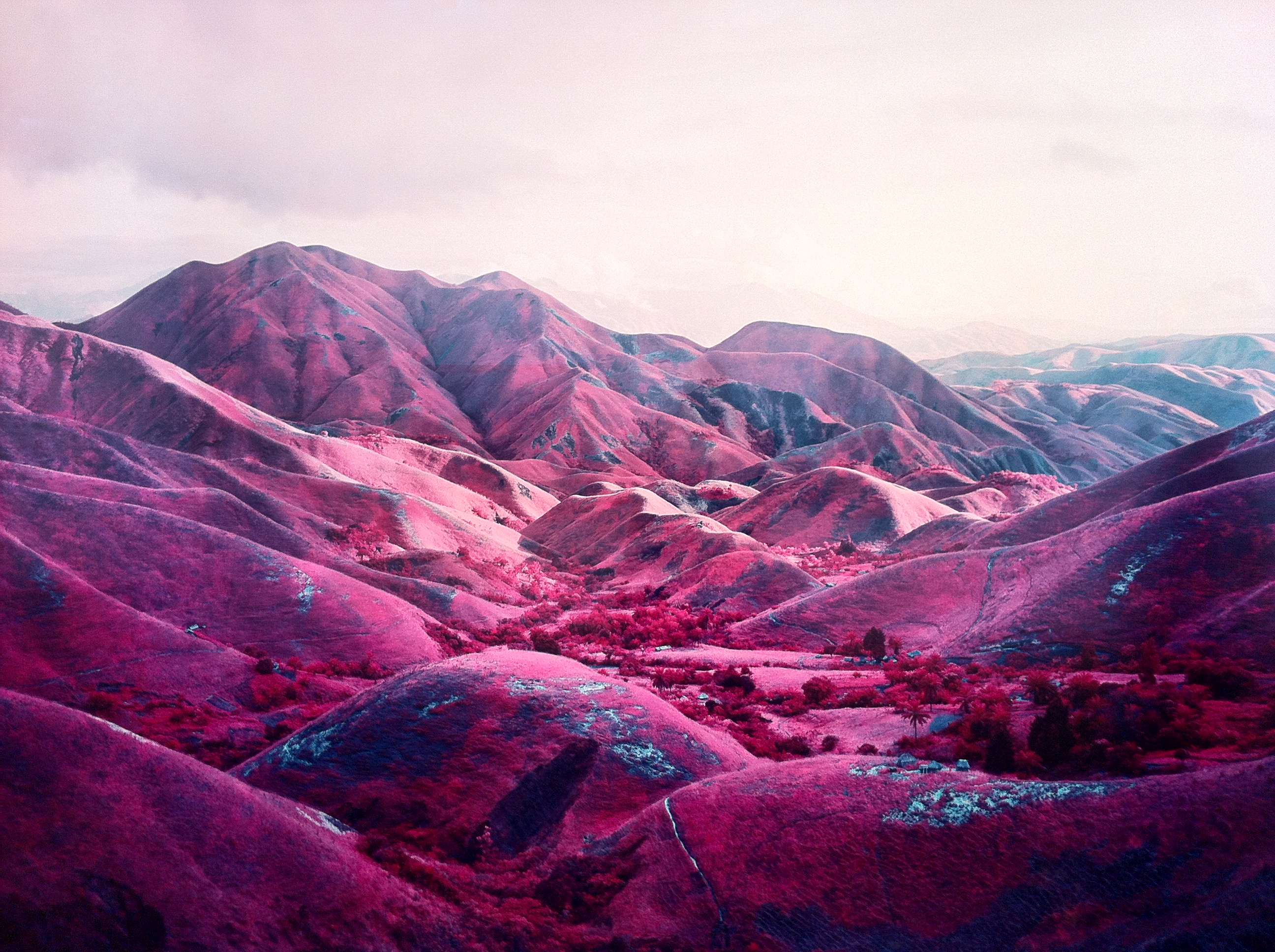 Pink Is the Colour of War Photographer Richard Mosse 2592x1936
