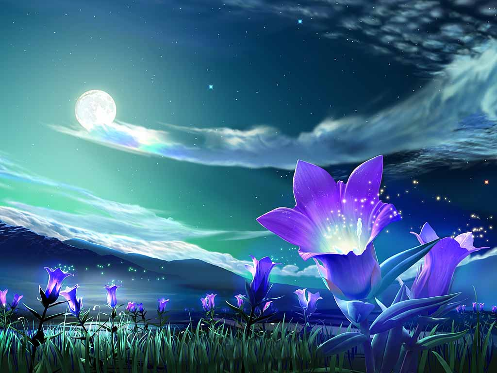 Night Sky Wallpaper HD wallpapers   Flower Under Night Sky Wallpaper 1024x768