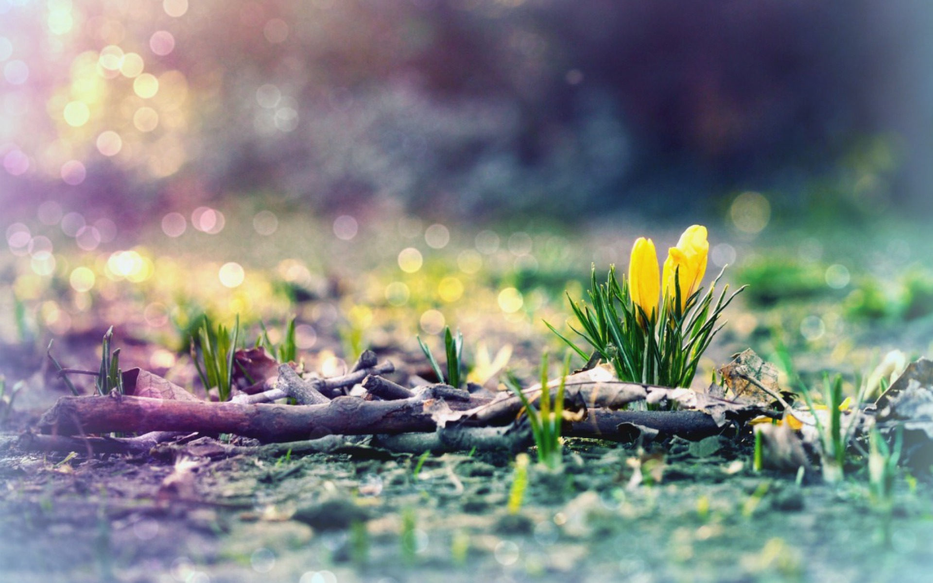 Spring Wallpapers for Desktop 1440x900 - WallpaperSafari |Spring Thaw Background Computer