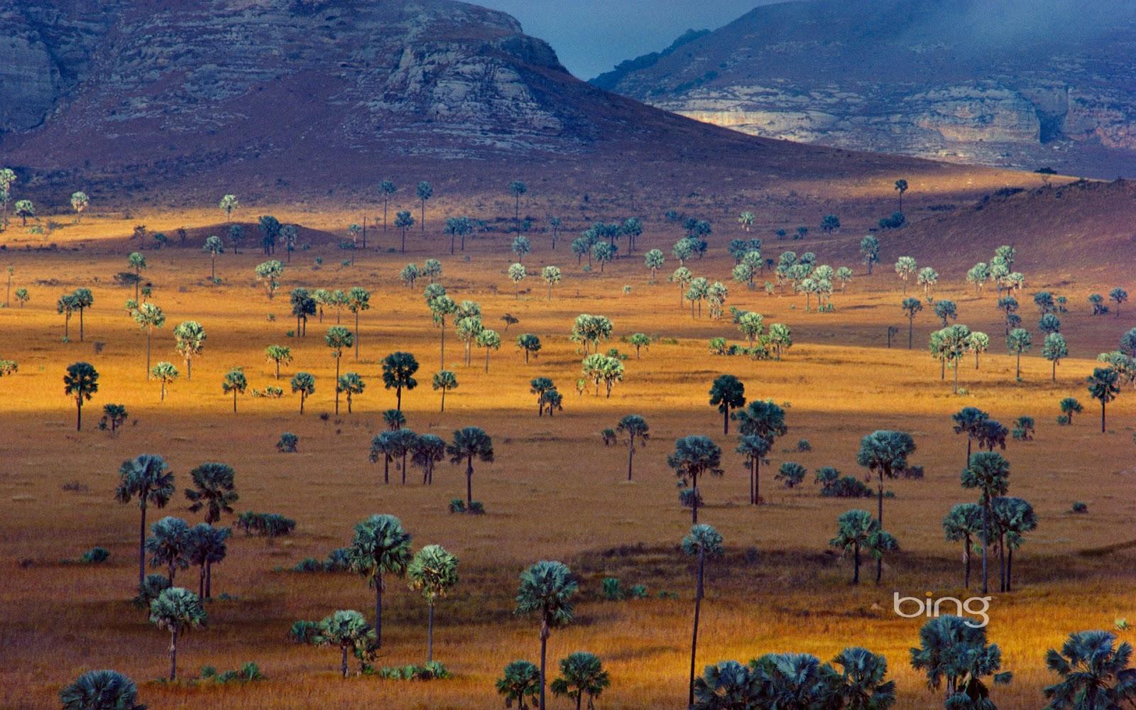 Plam trees growing on a savana Madagascar Frans LantingCorbis 1600x1000
