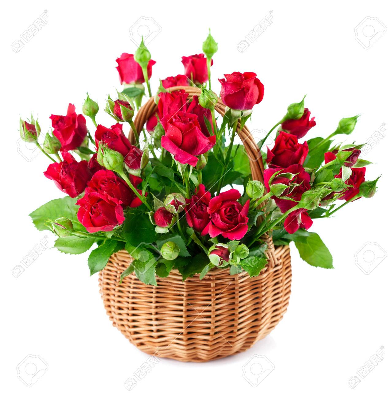 Bouque Red Roses In Bucket Isolated On White Background Stock 1272x1300