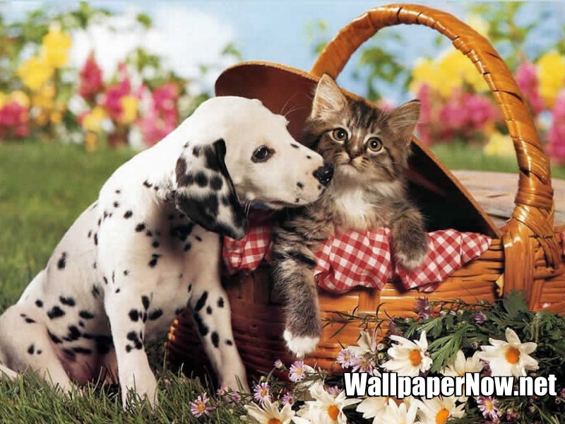 My Top Collection Dog and cat wallpapers 800x600