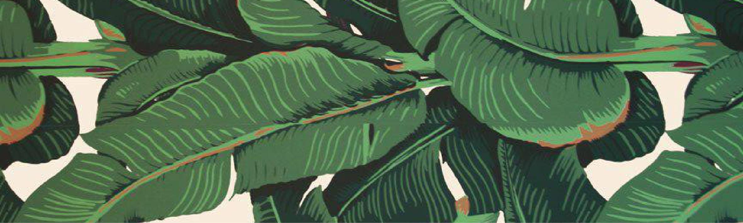 Free Download Displaying 17 Images For Banana Leaf Wallpaper Bathroom 2362x709 For Your Desktop Mobile Tablet Explore 49 Banana Leaves Wallpaper Banana Leaf Wallpaper For Sale Banana Palm Wallpaper Banana Tree Wallpaper Summer and spring design element. banana leaves wallpaper