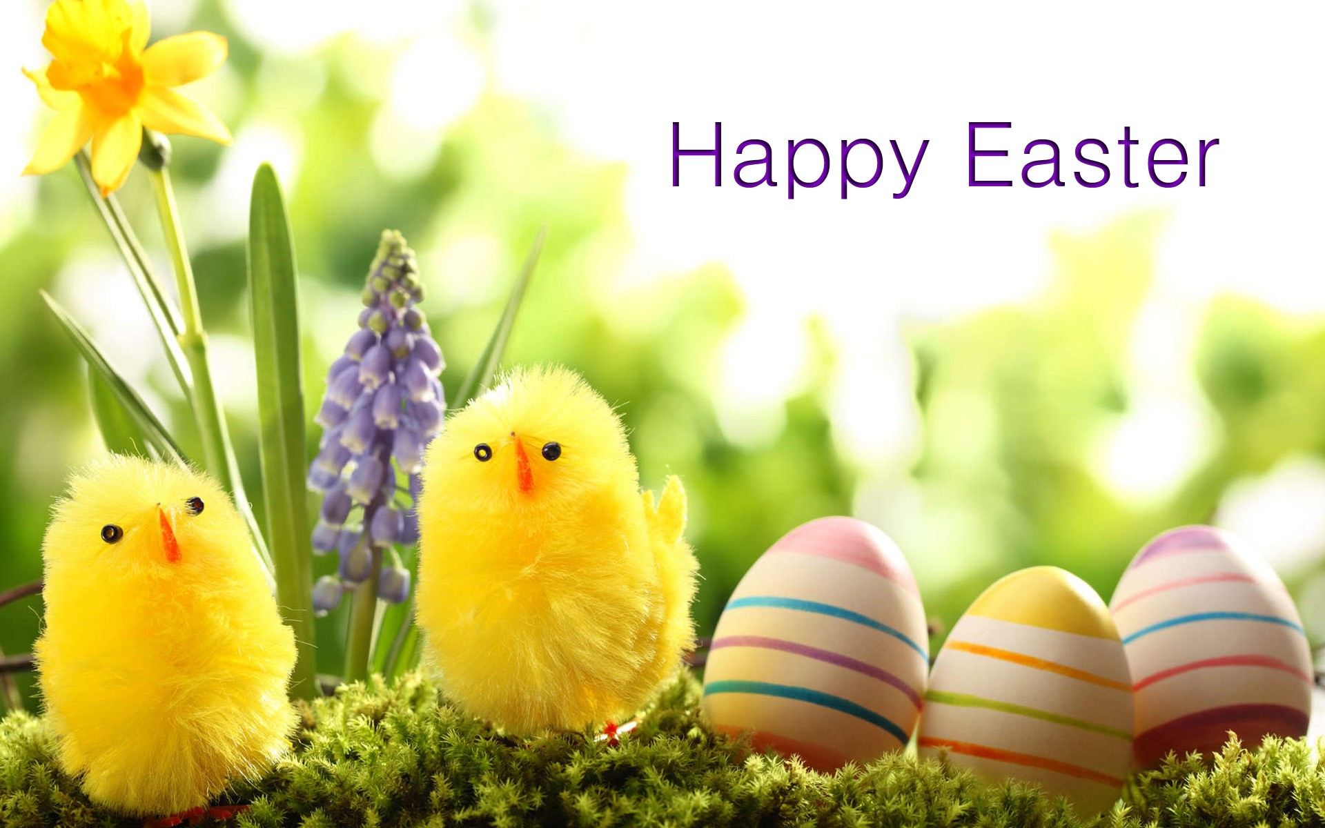 Easter Duck 2018 Wallpapers   New HD Wallpapers 1920x1200