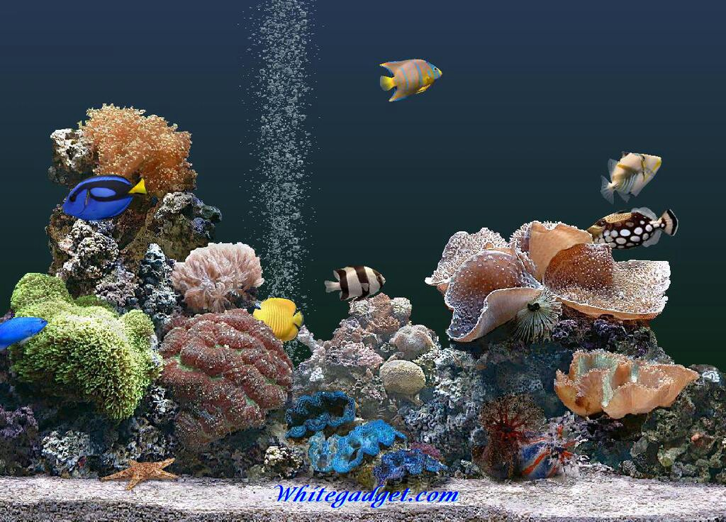 It is an image of Fish Tank Background Printable in hd wallpaper