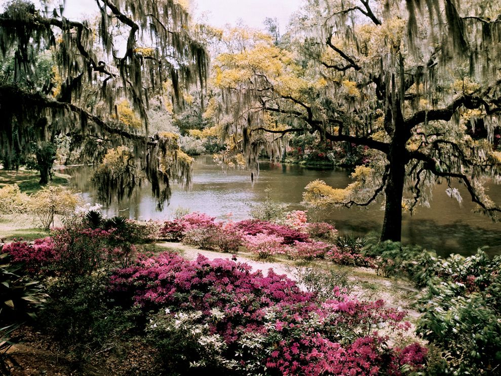 Middleton Gardens South Carolina 989x742