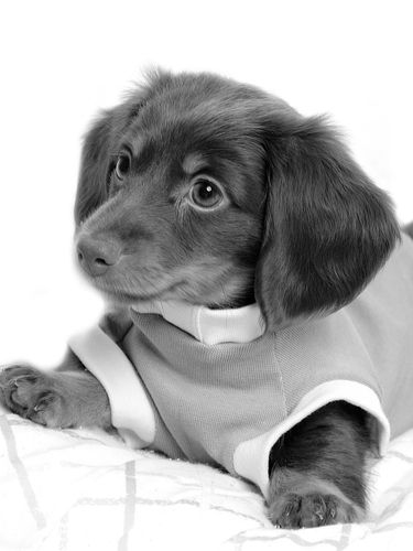 animals cute dogs nature puppy 375x500