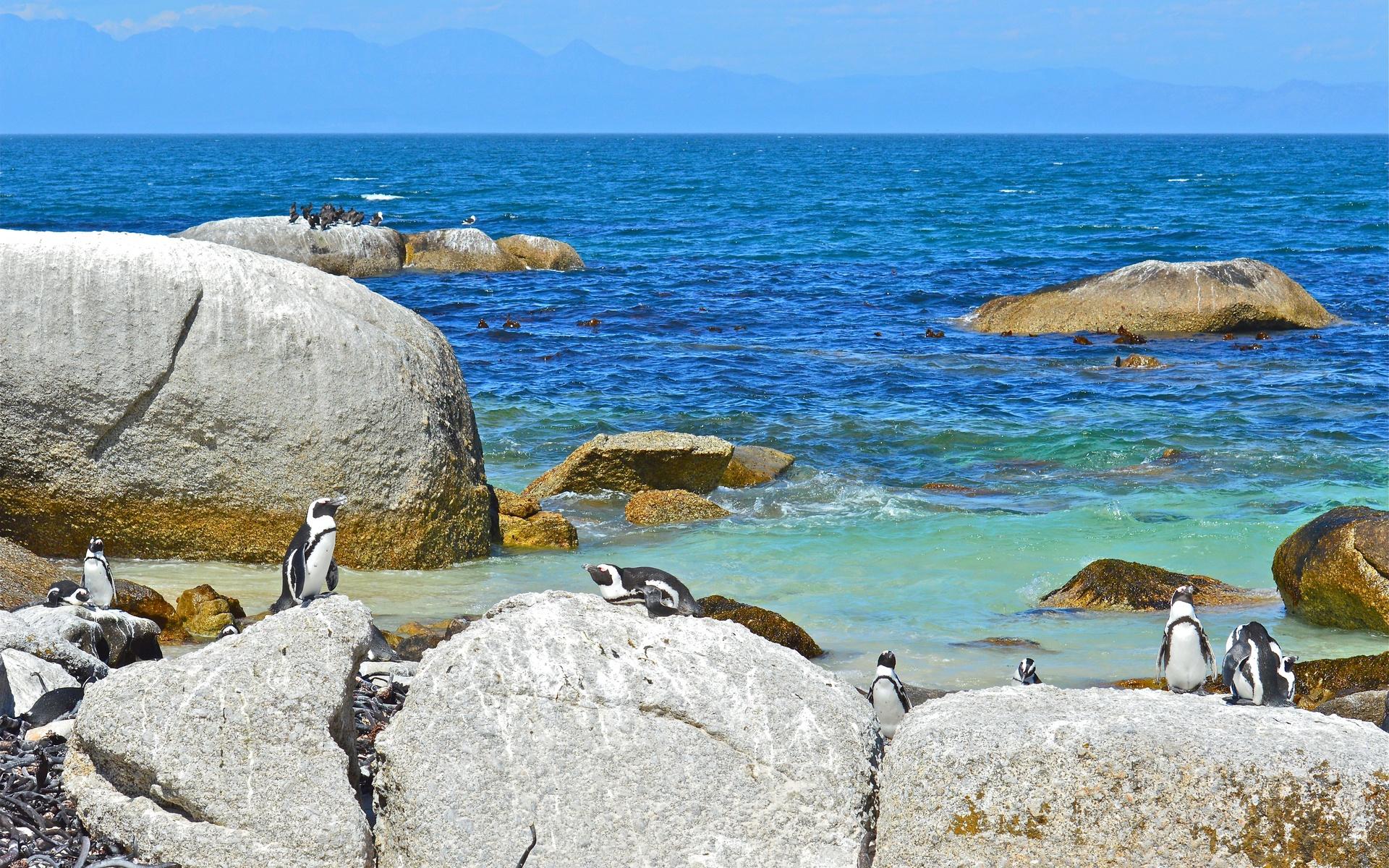 Пингвины на камушках  № 2020582 загрузить