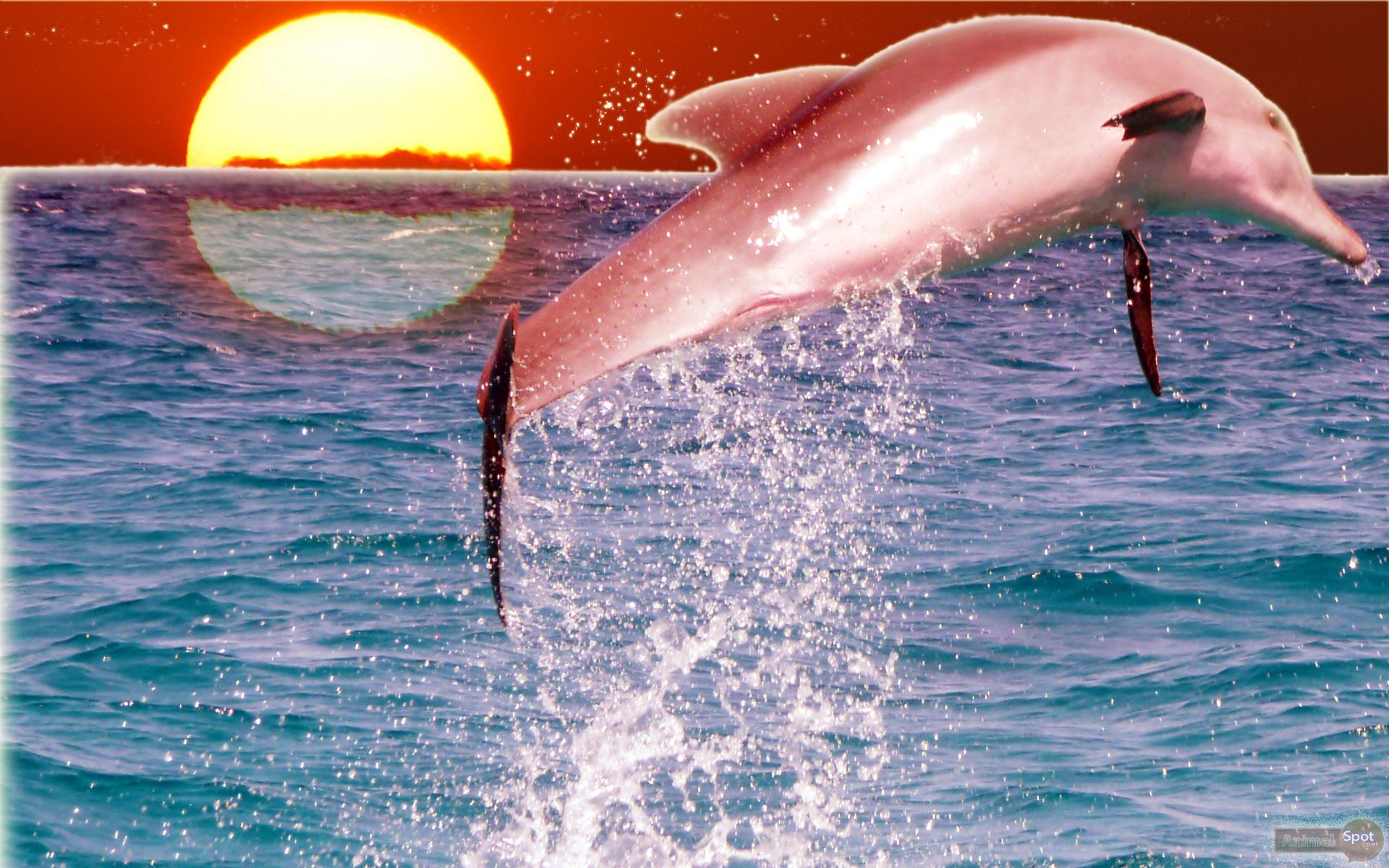 dolphins wallpaper dolphins wallpaper dolphins wallpapers 1920x1200