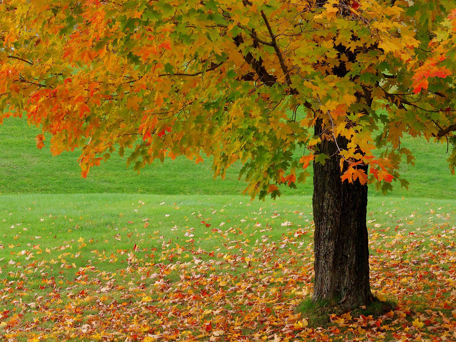 autumn season wallpaper hd beautiful autumn season wallpaper hd 1600x1200