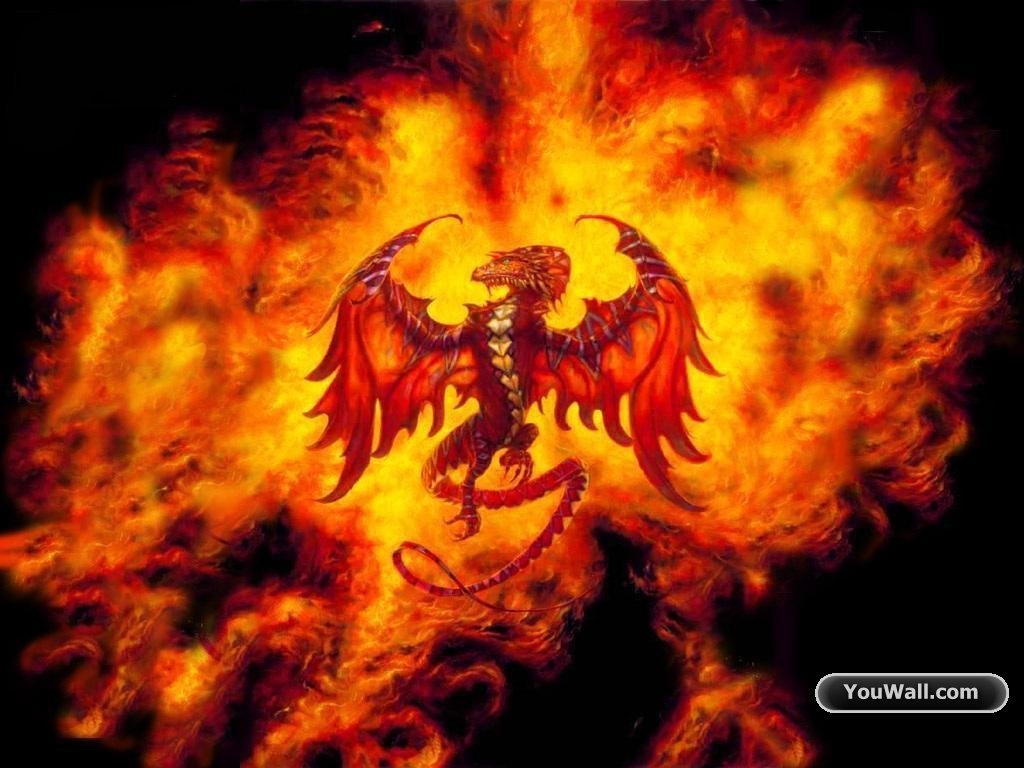 Fire Dragon   funkyrach01 Wallpaper 16754457 1024x768