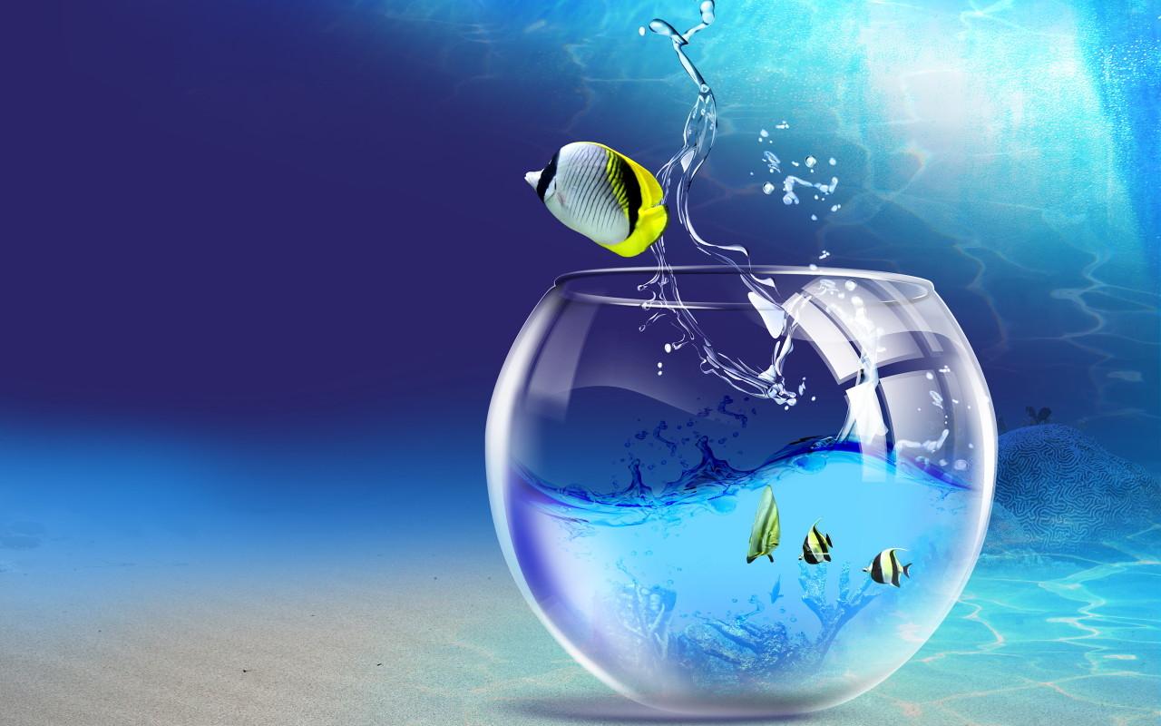 Fish aquarium wallpaper free download - 1024x800 1280x800 1366x768 1440x900 Original