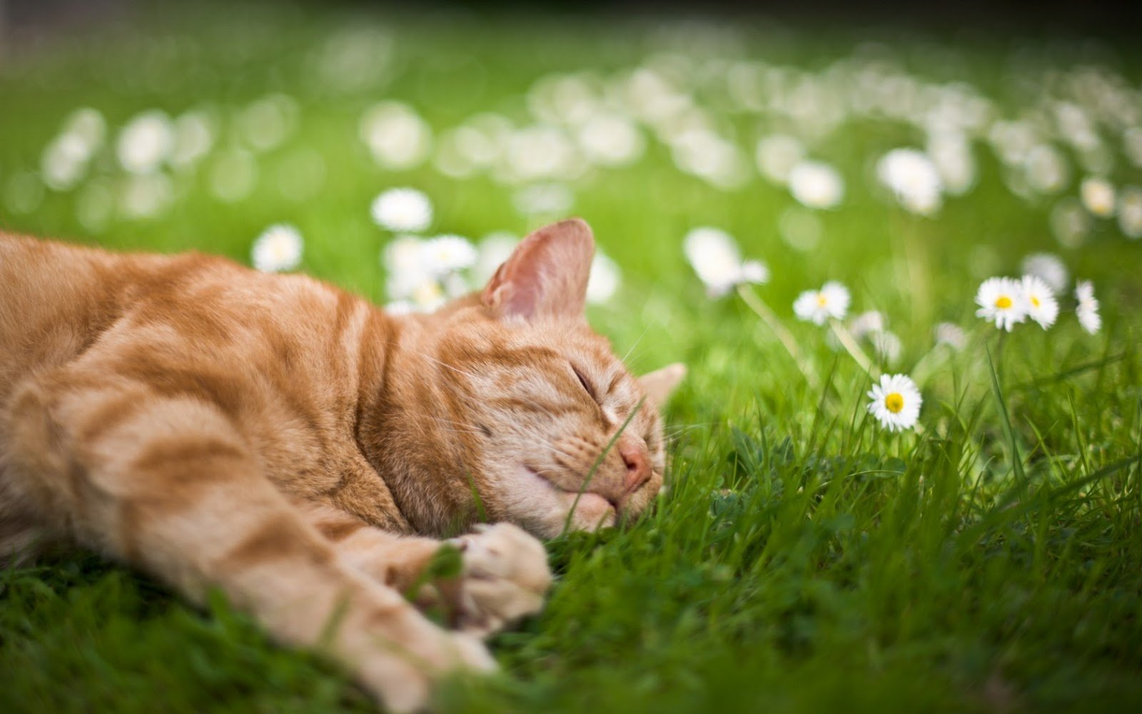 10 Ways to Keep Your Cat Cool in Summer Heat - Catster