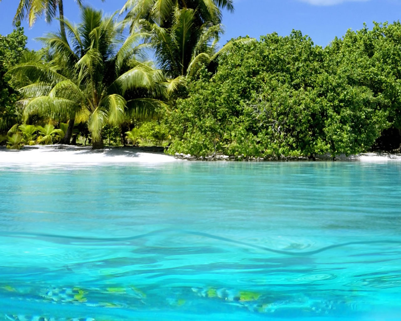 Jamaica Beaches Wallpaper Free Best Family Beach Palm Aruba