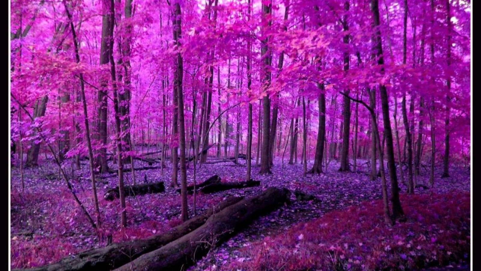 Pink Nature Wallpaper 1600x900