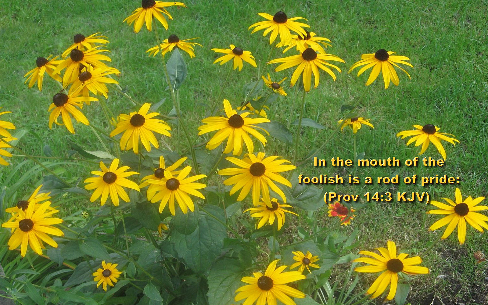 bible verses wallpaperjpg 1600x1000