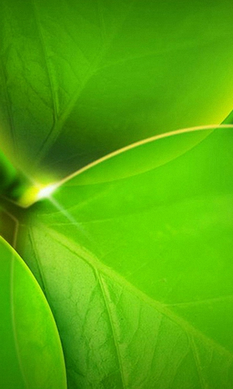 480x800 HD green leaves plant LG phone wallpapers mobile background 480x800