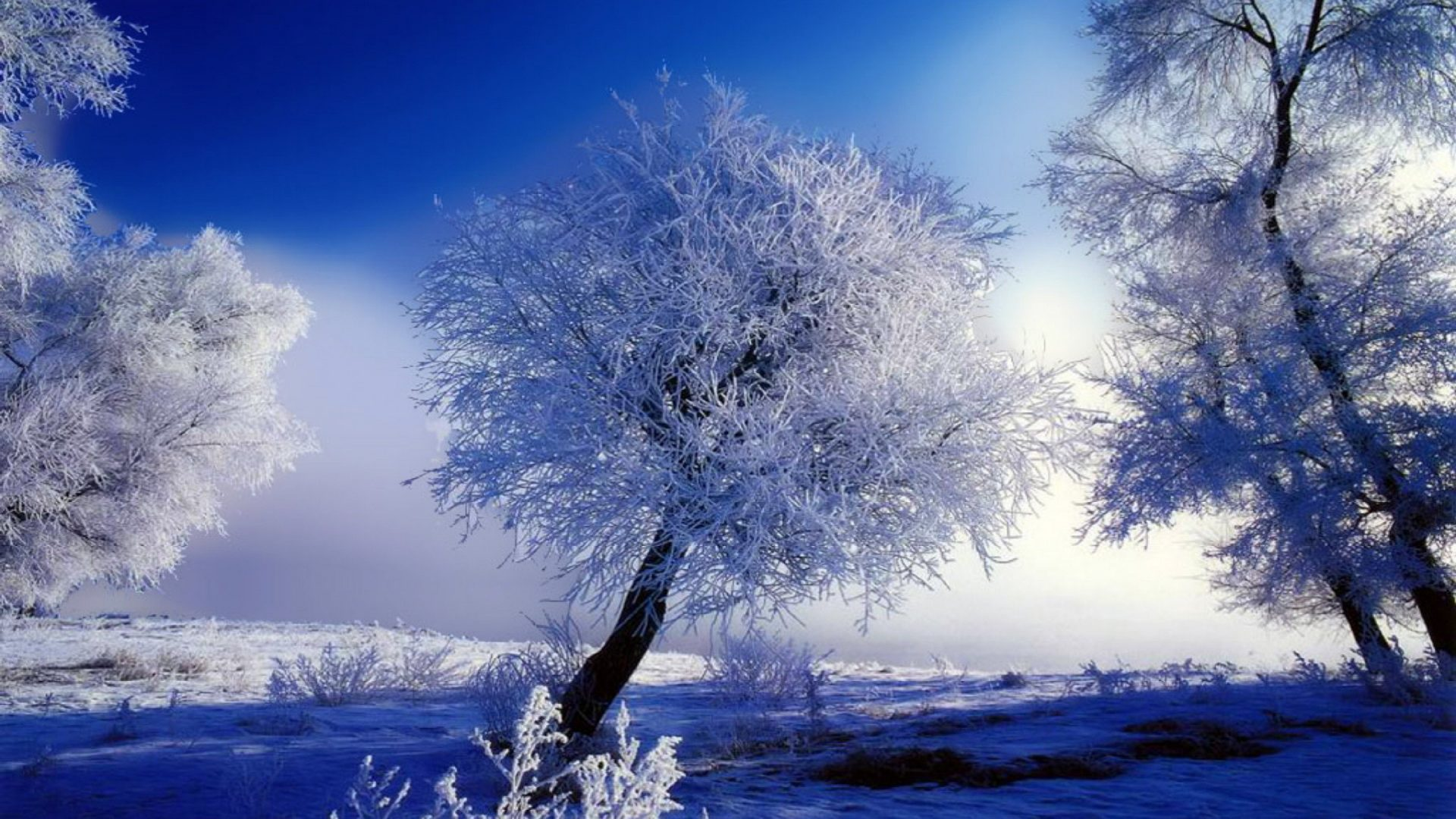 beautiful winter snow hd hd wallpaper HD Wallpapers 1920x1080