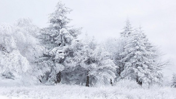 winter winter scene wallpaper 600x338