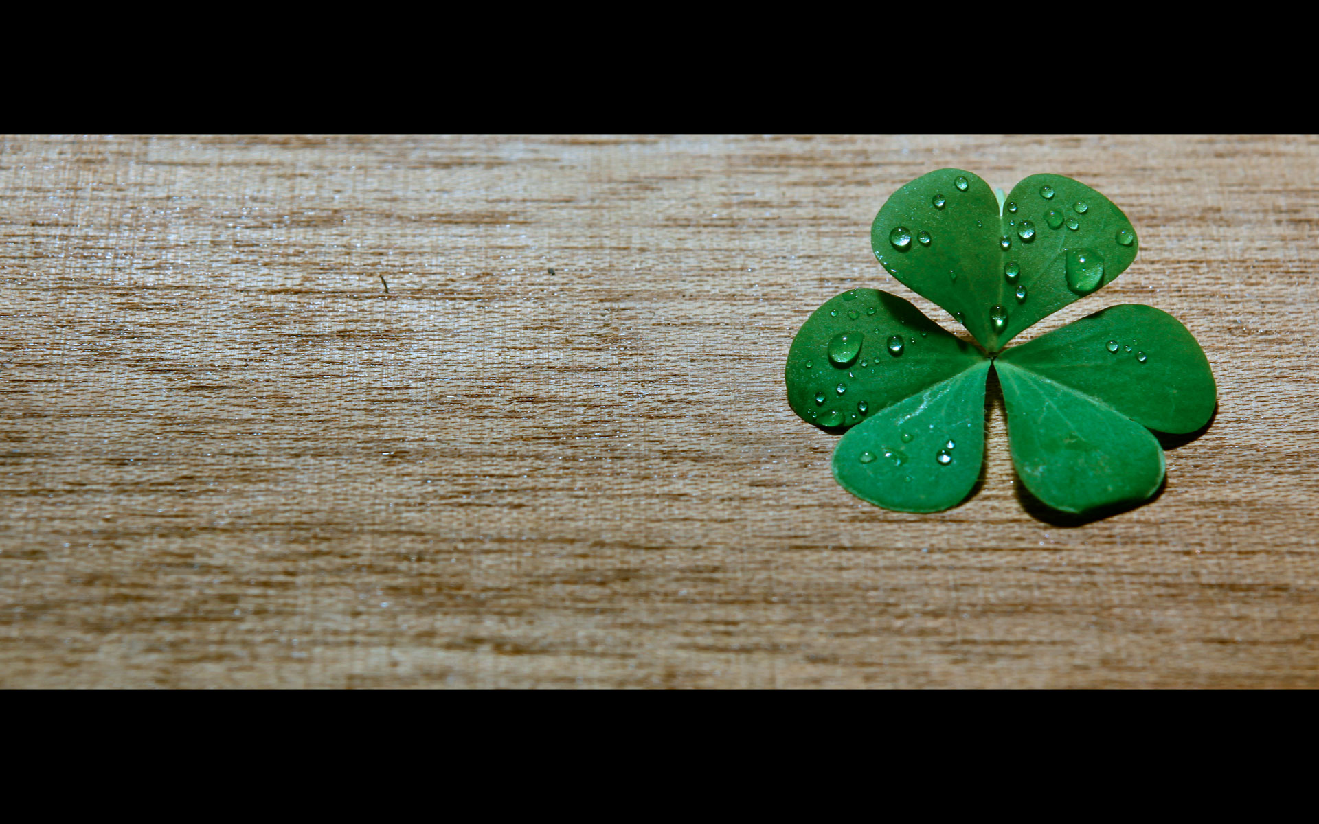 Clover Widescreen Related wallpapers HD   165203 1920x1200