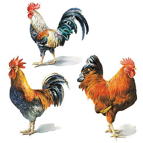 Wallies 12205 Painted Roosters Wallpaper Cutout 500x500