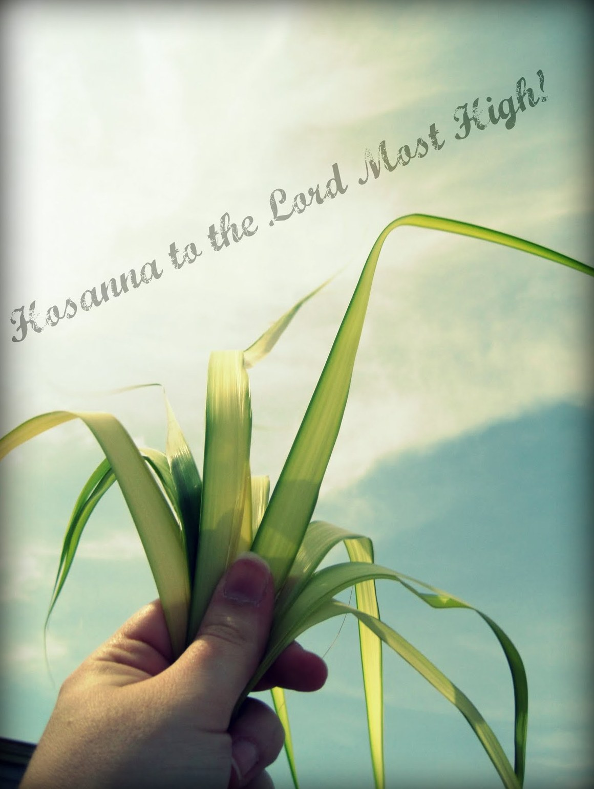 Palm Sunday Wallpapers 2015 Download 1160x1542