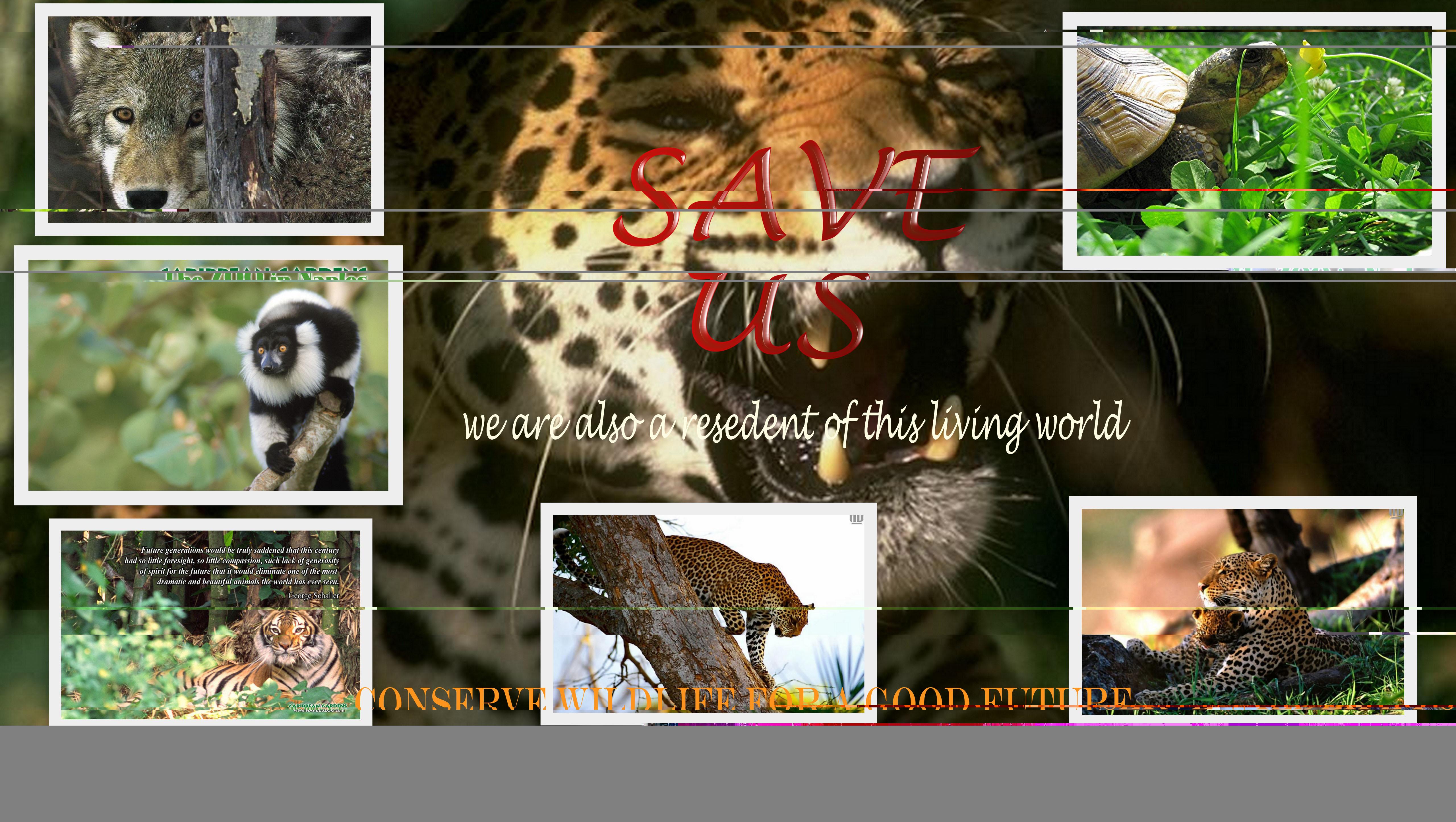 SAVE ANIMAL wallpaper   ForWallpapercom 5120x2891