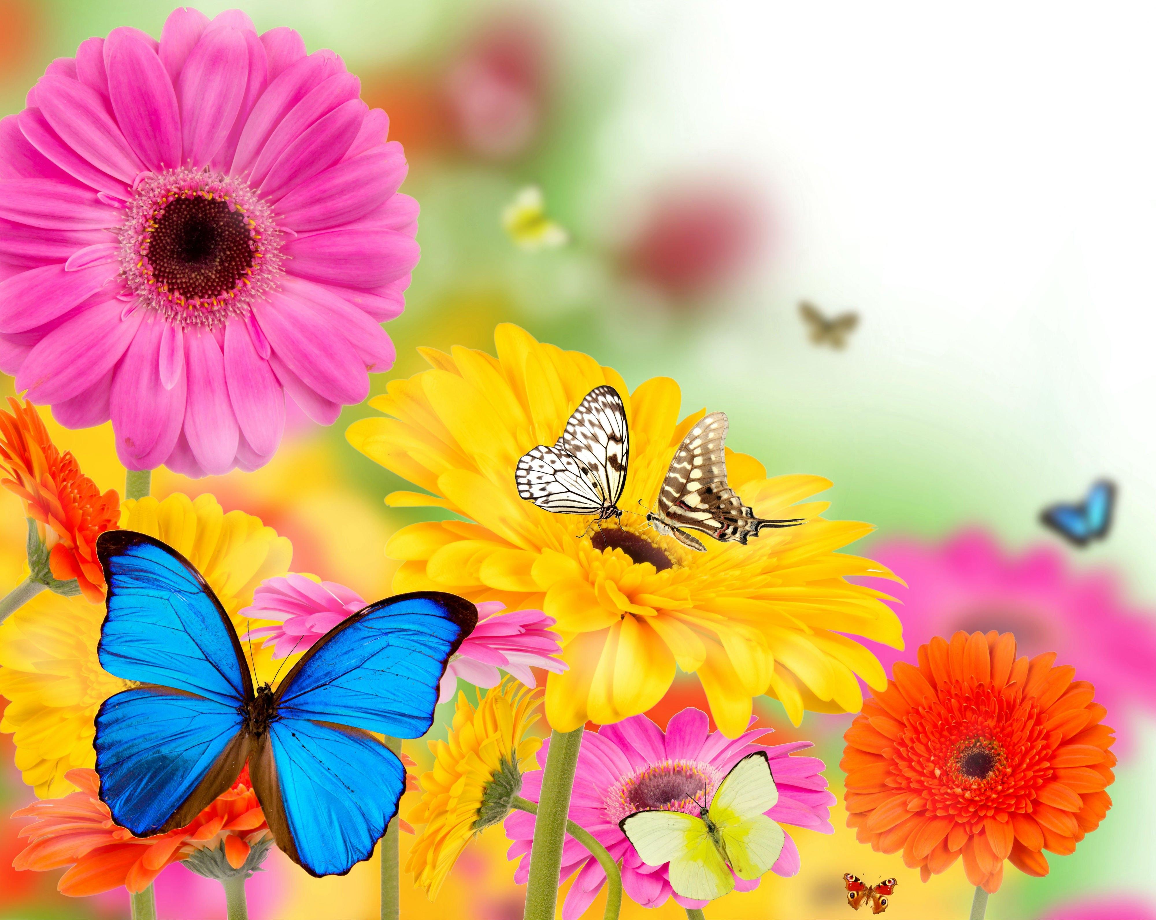 Spring flower wallpaper backgrounds wallpapersafari spring flowers and butterflies wallpapers hd desktop and 4000x3183 mightylinksfo