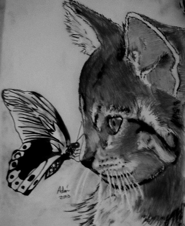 Cat And Butterfly Wallpaper Wallpapersafari