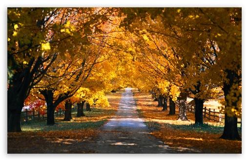 Tree Tunnel Road Autumn HD wallpaper for Standard 43 54 Fullscreen 510x330