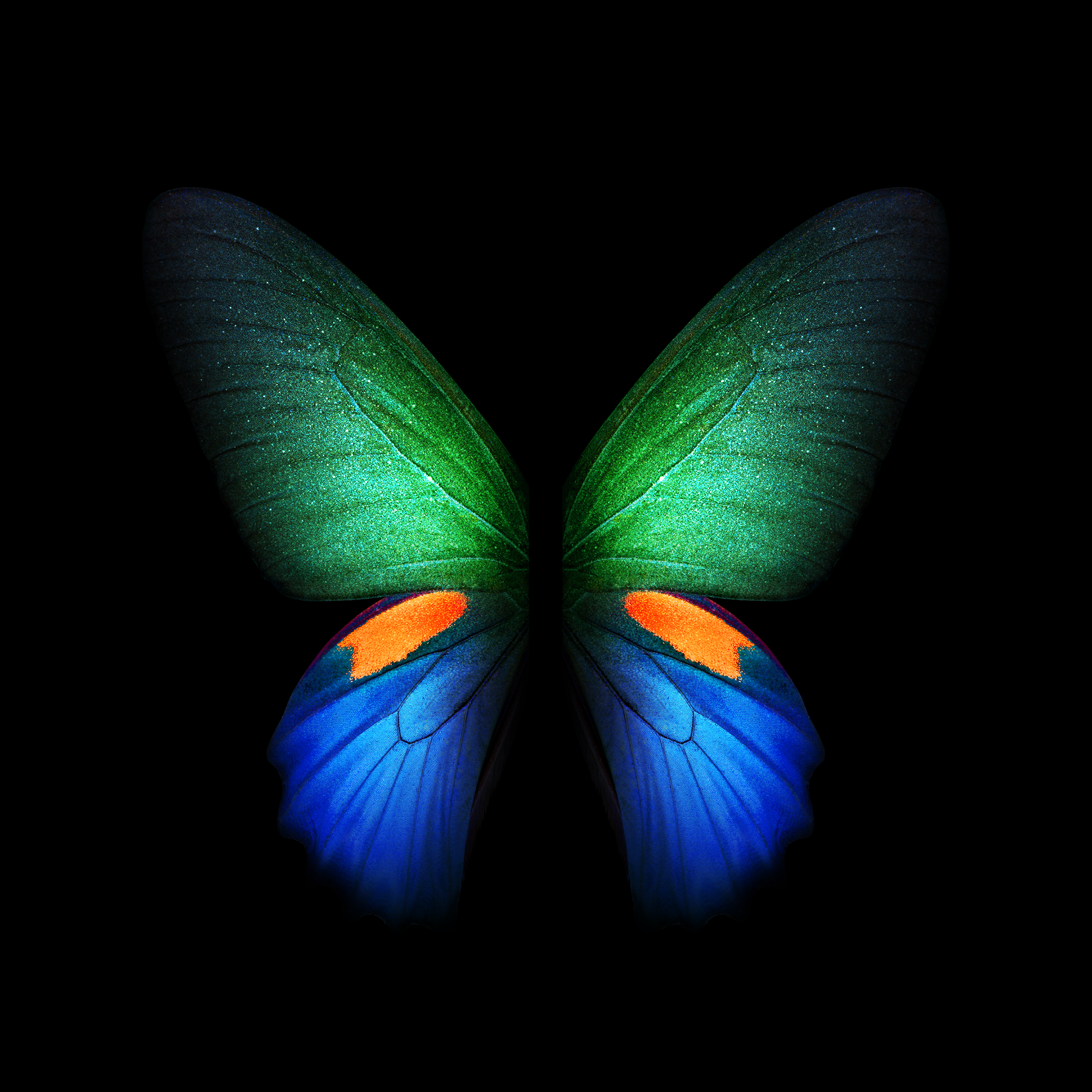 Samsung Galaxy Fold live and static wallpapers available for download 2152x2152