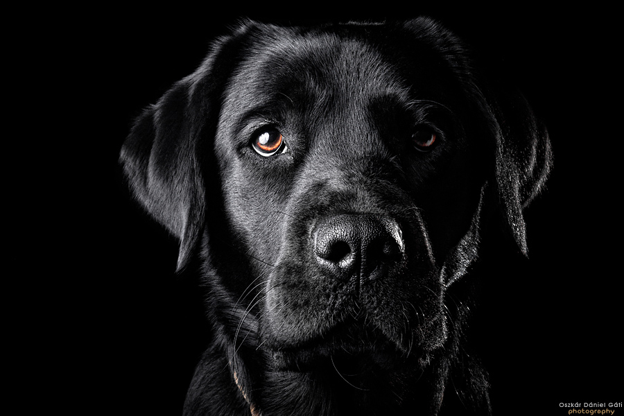 The Black Lab II by Wordup 900x600