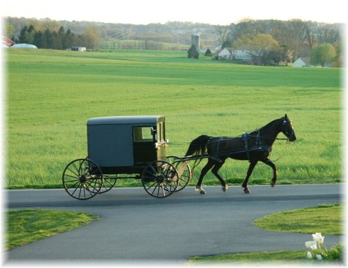 Amish horse and buggy with lush background farm scene 504x388